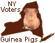 New York Voters: 900,000 Guinea Pigs