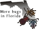 More bugs in Florida
